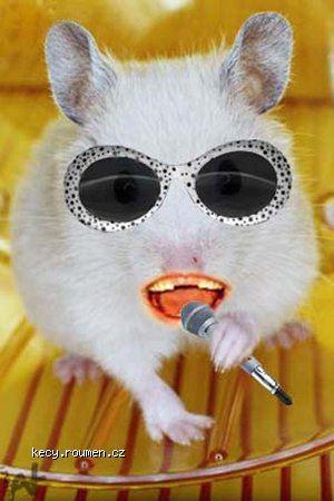 singinghamster