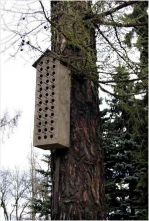 Treehostel