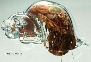 glassshellhermitcrab