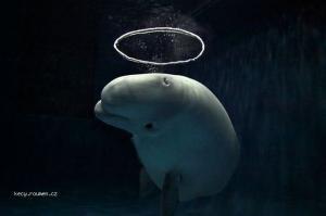 Saint dolphin
