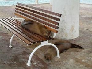 Seals maso