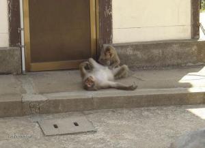 normalka na ulici