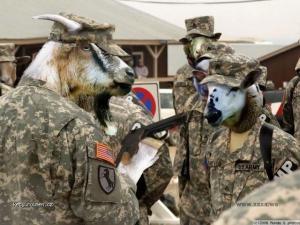 jako ovce