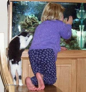 obdivovatele akvaria