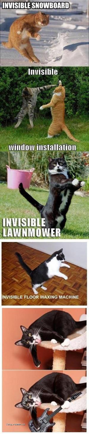 invisible cat 4