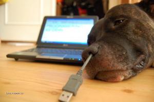 USB a pes