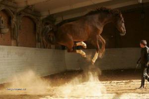 i kone umi letat