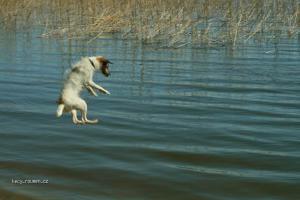 letajici pes