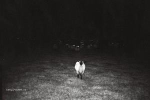 White alone
