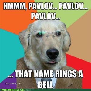 businessdogpavlov
