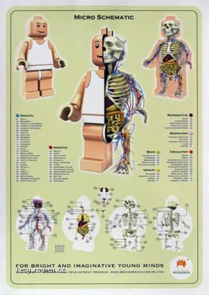 anatomy2009 5B1 5D