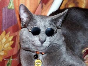 High Society Cats1