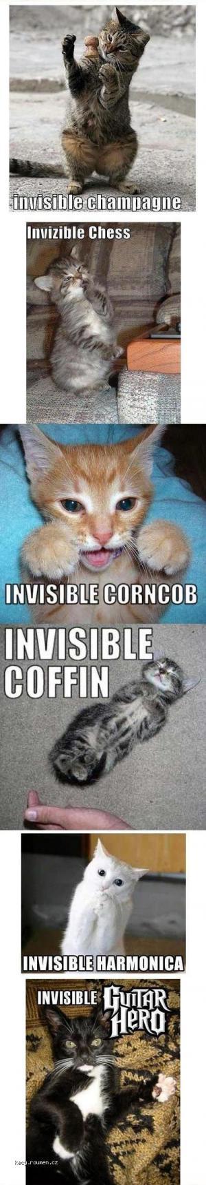 invisible cat 2