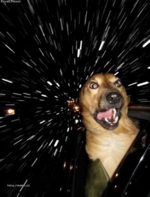 warp speed dog