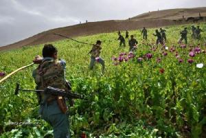 Opium war in Afghanistan1