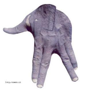ruce slon