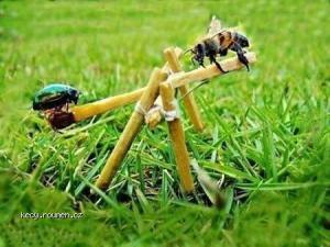 bug hammock