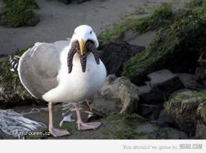 cthulbird