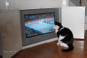 schaatskat