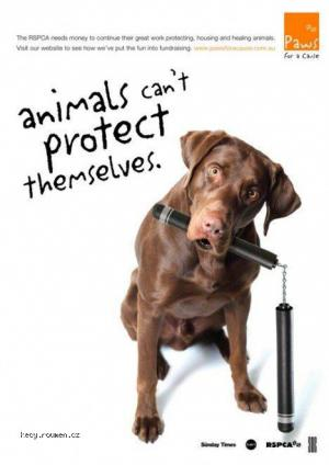 animals can not