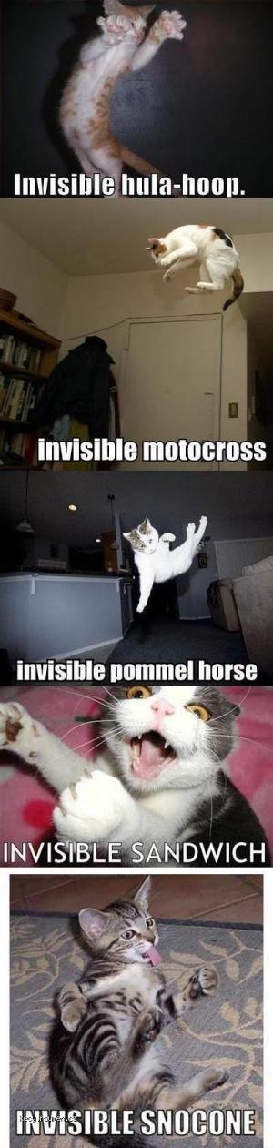 invisible cat 3