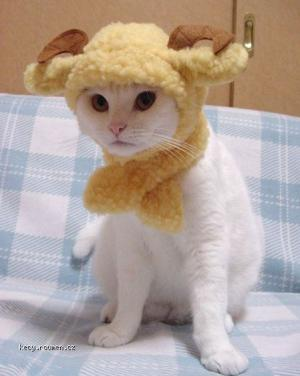 cats in hats 002
