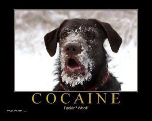 gd cocaine
