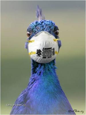 prevence proti ptaci chripce1