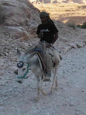 BMW Donkey
