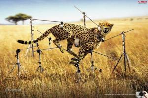 jak fotit geparda