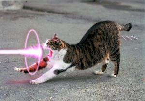all glory to power cat