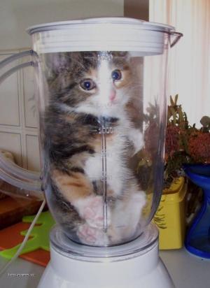 kitten in blender