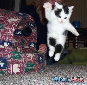 flying kittah