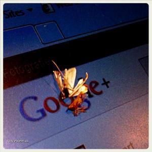googleplus bug