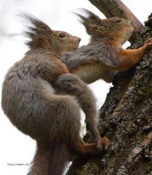 sex na strome