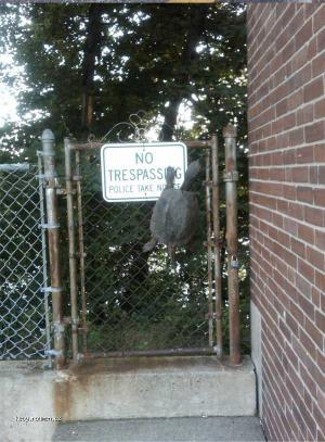 no trespassing 002