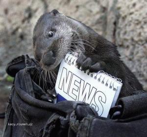 novinky to je moje