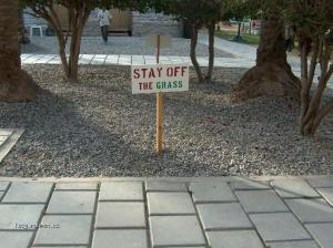 stay of the grass