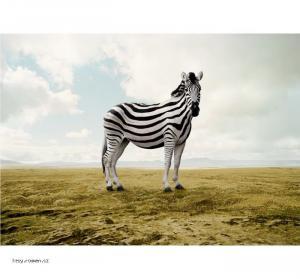 jina zebra