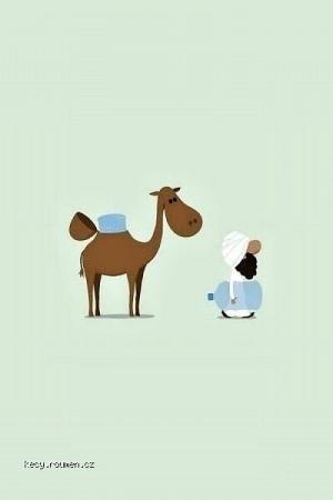 X Really Camel