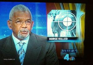 horse killed