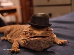 Nice chameleon