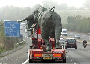 transport slona