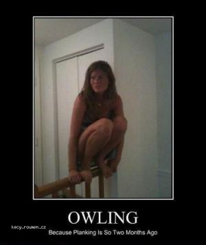 owling1