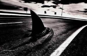 asfaltovej zralok