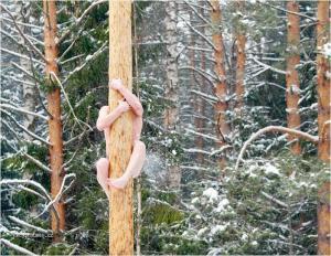 tarzan v zime