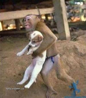 Funny dogs02