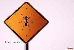 ants2001Silver 5B1 5D