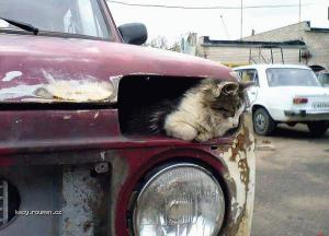 auto s mnoukackou