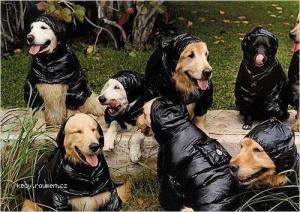 psi plastenky